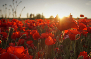 Image result for remembrance day 2019