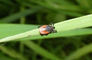 Tick-borne encephalitis virus detected in ticks in the UK