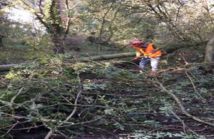 Select trees are being felled across the flood plain to help trap water within the wet woodland. The brash will be used to make wood bunds within the old withy bed furrows.