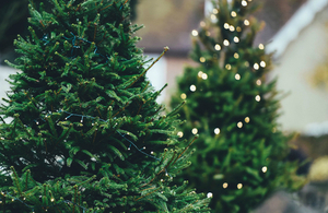 Two fir trees with Christmas lighting