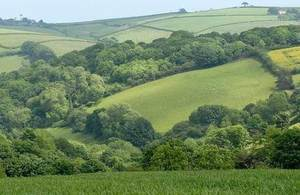 Fields with trees across rolling hills