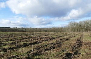 Picture of the newly planted trees in the Ash Archive