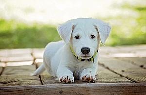 white puppy sitting on the floor