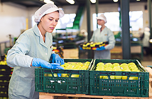 Workers packing fruit in a warehouse.