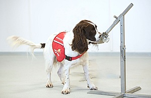 A sniffer dog sniffing a sample