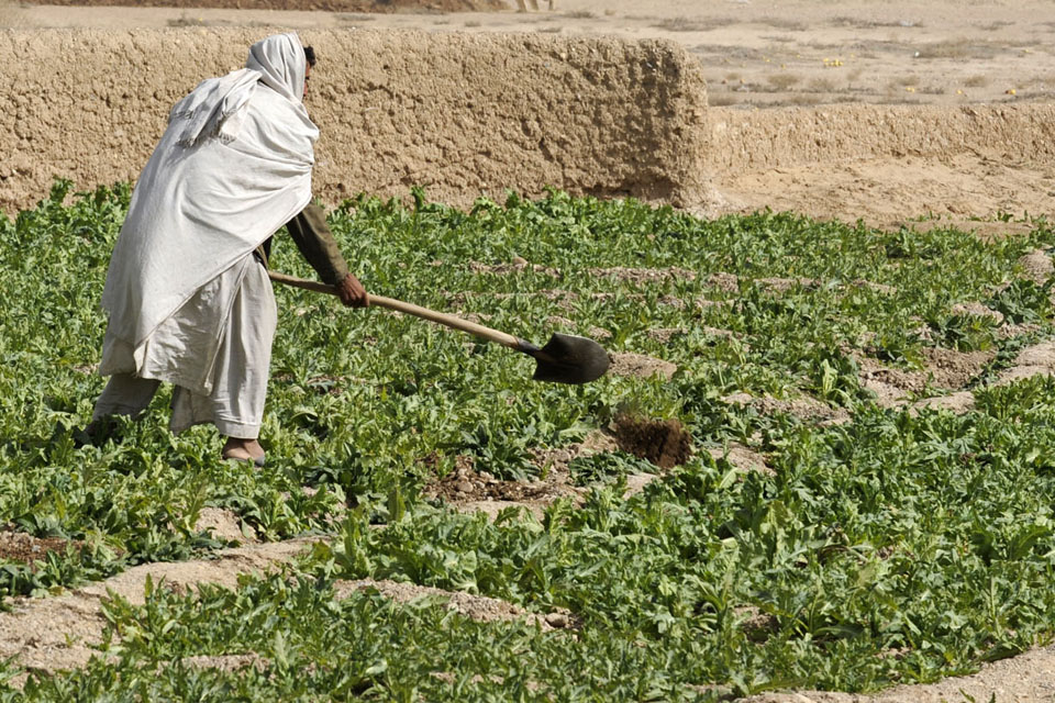 An Afghan farmer digs in his field