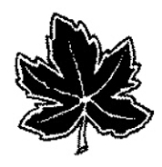 Maple leaf black and white - Example 4