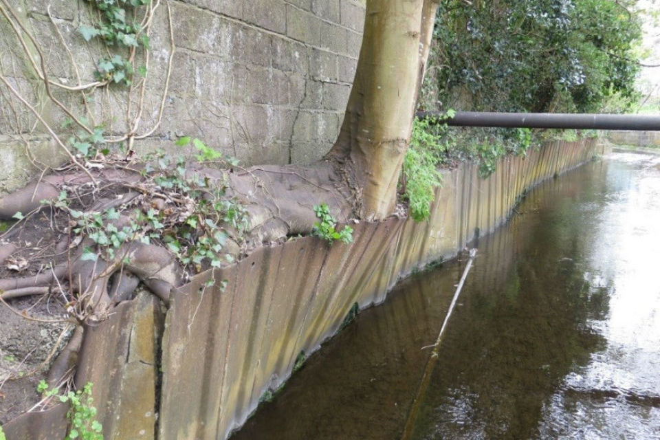 A tree growing between tall and low walls that line side of river channel